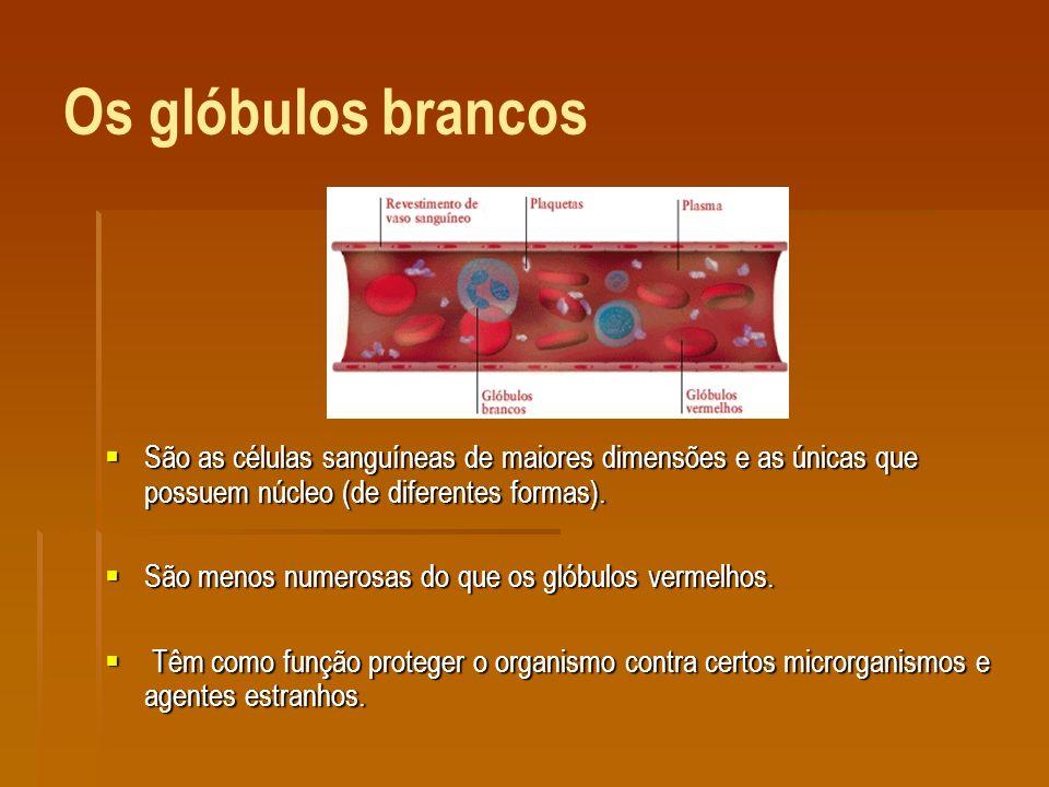 As plaquetas São fragmentos de células, sendo por isso os constituintes mais pequenos do sangue, com aproximadamente um quarto do tamanho dos glóbulos vermelhos.