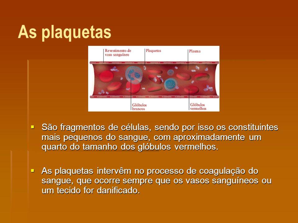 Sistema Circulatório É constituído pelo coração e por vasos sanguíneos - artérias, veias e capilares.