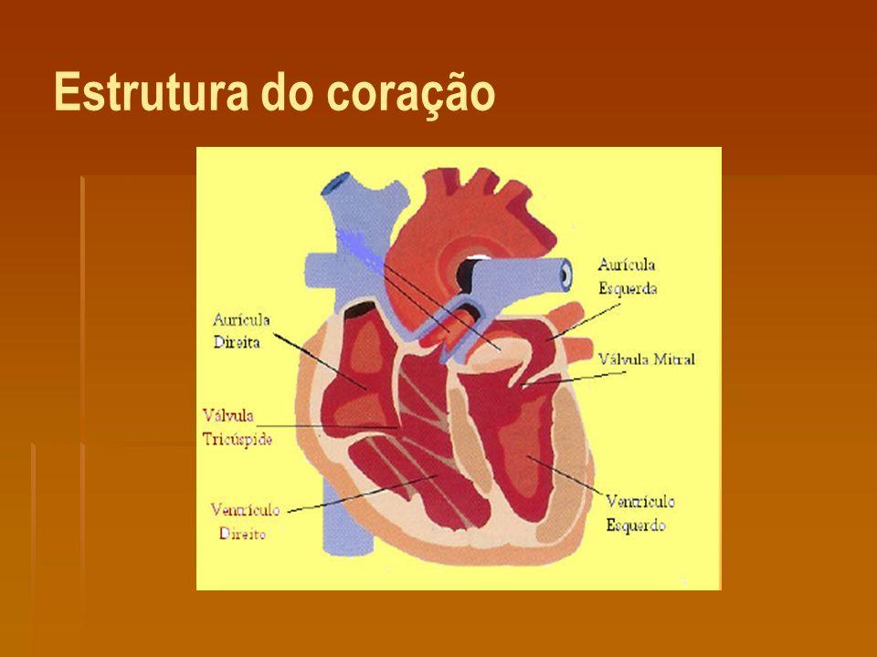 O coração, é constituído por 4 cavidades: 2 aurícula e dois ventrículos.