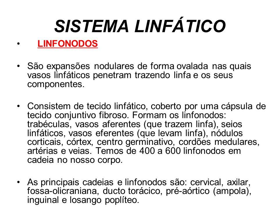 SISTEMA LINFÁTICO LINFONODOS São expansões nodulares de forma ovalada nas quais vasos linfáticos penetram trazendo linfa e os seus componentes. Consis