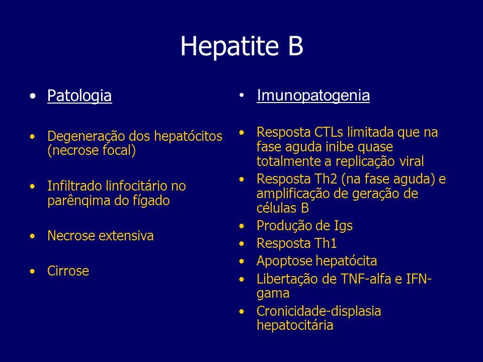 Hepatite B Patologia Degeneração dos hepatócitos (necrose focal) Infiltrado linfocitário no parênqima do fígado Necrose extensiva Cirrose Imunopatogen