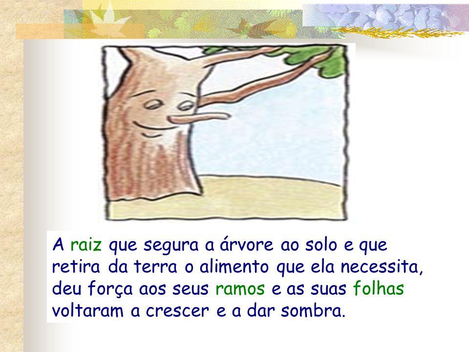 A raiz que segura a árvore ao solo e que retira da terra o alimento que ela necessita, deu força aos seus ramos e as suas folhas voltaram a crescer e