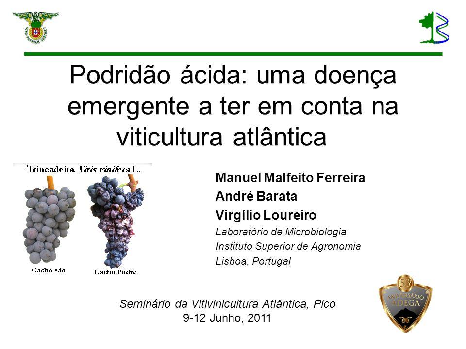 Podridão ácida: uma doença emergente a ter em conta na viticultura atlântica Manuel Malfeito Ferreira André Barata Virgílio Loureiro Laboratório de Mi