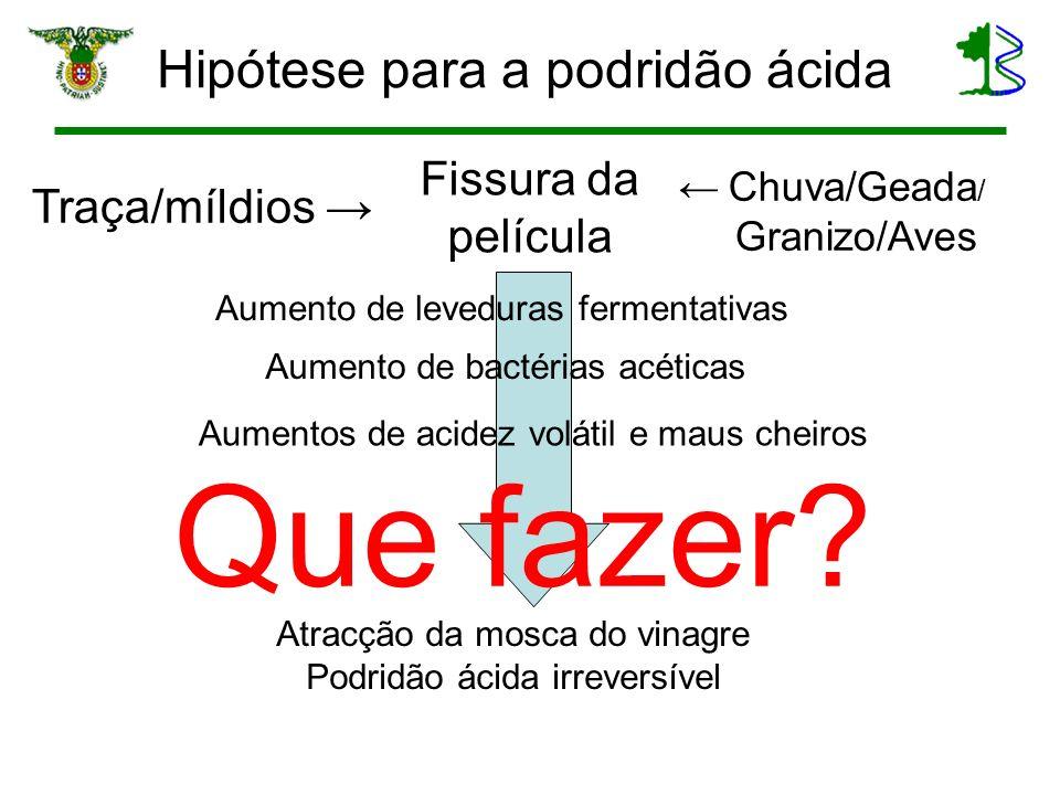 Hipótese para a podridão ácida Fissura da película Traça/míldios Chuva/Geada / Granizo/Aves Aumento de leveduras fermentativas Aumento de bactérias ac