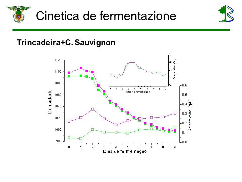 Cinetica de fermentazione Trincadeira+C. Sauvignon