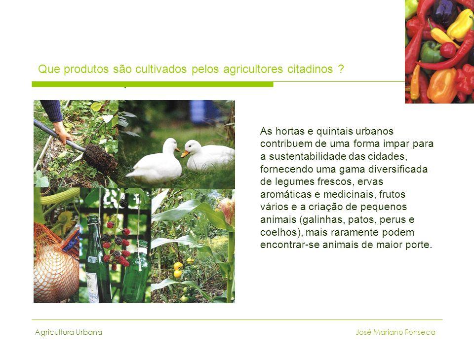 Agricultura Urbana José Mariano Fonseca Que produtos são cultivados pelos agricultores citadinos ?. As hortas e quintais urbanos contribuem de uma for