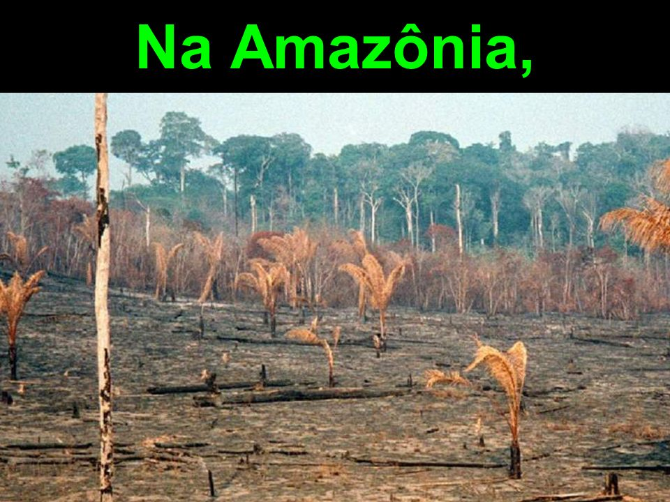 Na Amazônia,