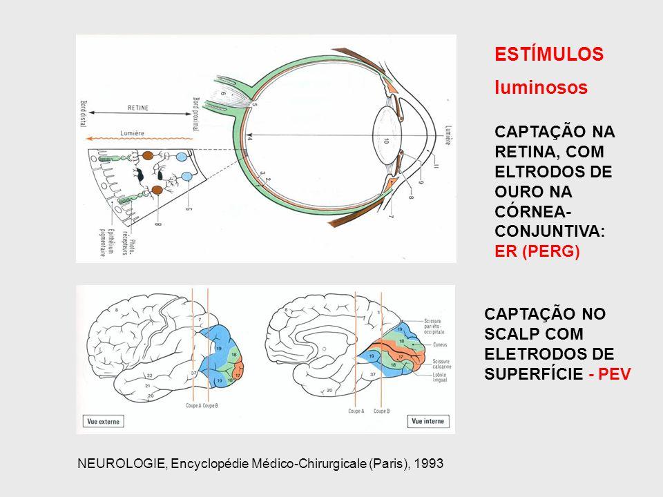 ESTÍMULOS luminosos CAPTAÇÃO NO SCALP COM ELETRODOS DE SUPERFÍCIE - PEV CAPTAÇÃO NA RETINA, COM ELTRODOS DE OURO NA CÓRNEA- CONJUNTIVA: ER (PERG) NEUR