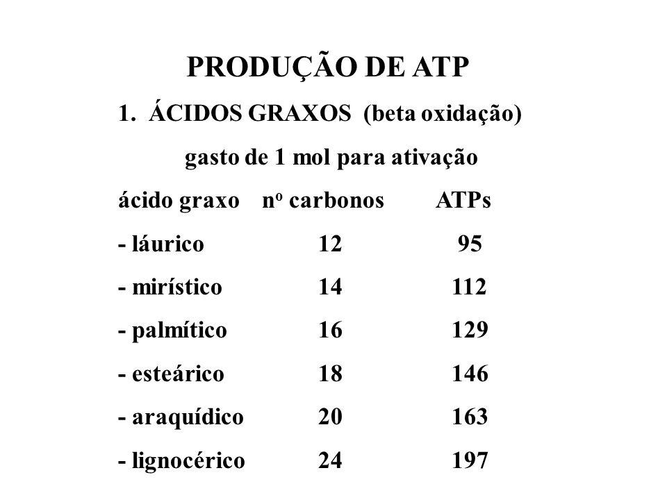 PRODUÇÃO DE ATP 1. ÁCIDOS GRAXOS (beta oxidação) gasto de 1 mol para ativação ácido graxo n o carbonos ATPs - láurico12 95 - mirístico14112 - palmític