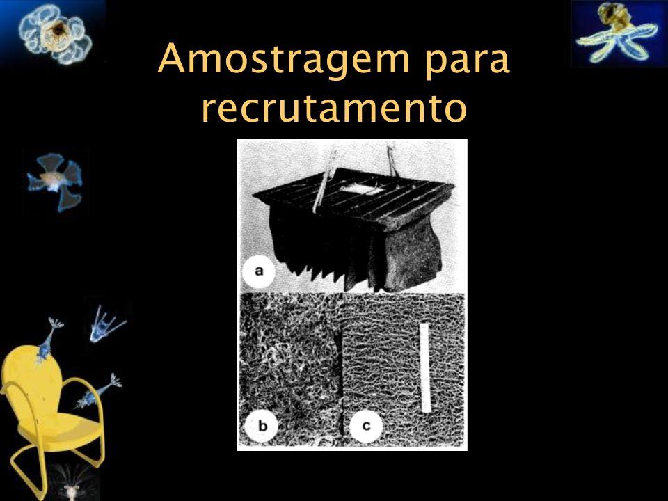 Amostragem para recrutamento Figura x.: Aparatos para medição do assentamento das pós-larvas de Panulirus argus feito por Little & Milano, 1980.