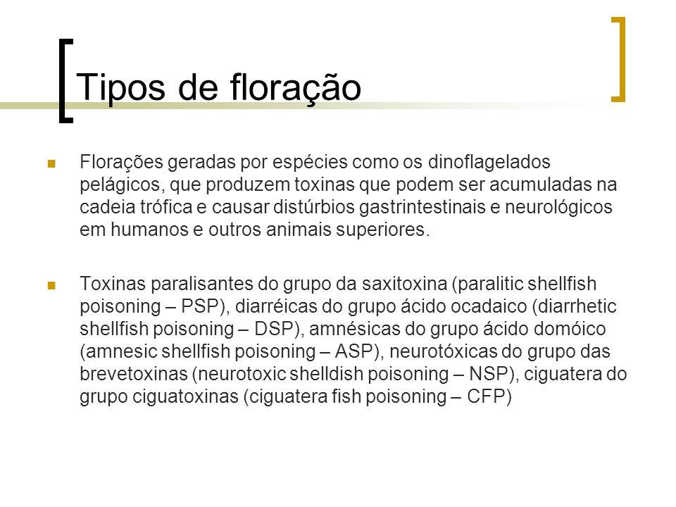 Tipos de floração Florações geradas por espécies como os dinoflagelados pelágicos, que produzem toxinas que podem ser acumuladas na cadeia trófica e c