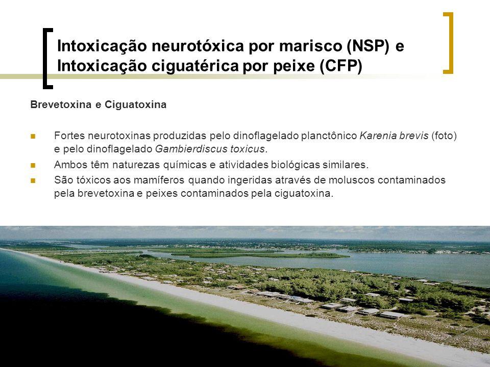 Intoxicação neurotóxica por marisco (NSP) e Intoxicação ciguatérica por peixe (CFP) Brevetoxina e Ciguatoxina Fortes neurotoxinas produzidas pelo dino