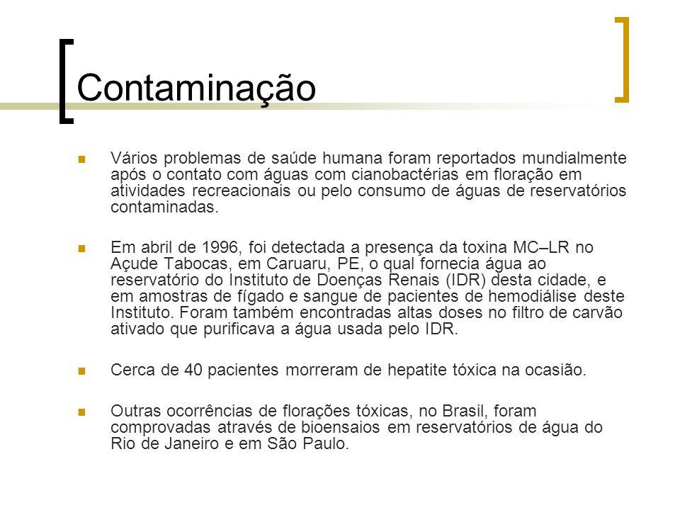 Contaminação Vários problemas de saúde humana foram reportados mundialmente após o contato com águas com cianobactérias em floração em atividades recr