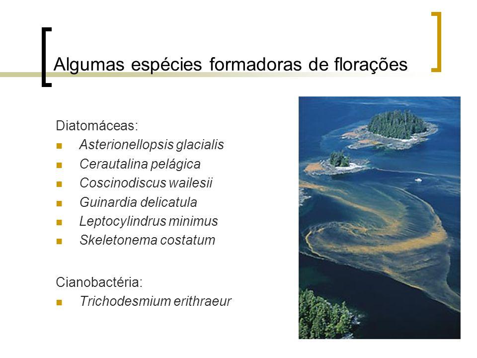 Algumas espécies formadoras de florações Diatomáceas: Asterionellopsis glacialis Cerautalina pelágica Coscinodiscus wailesii Guinardia delicatula Lept