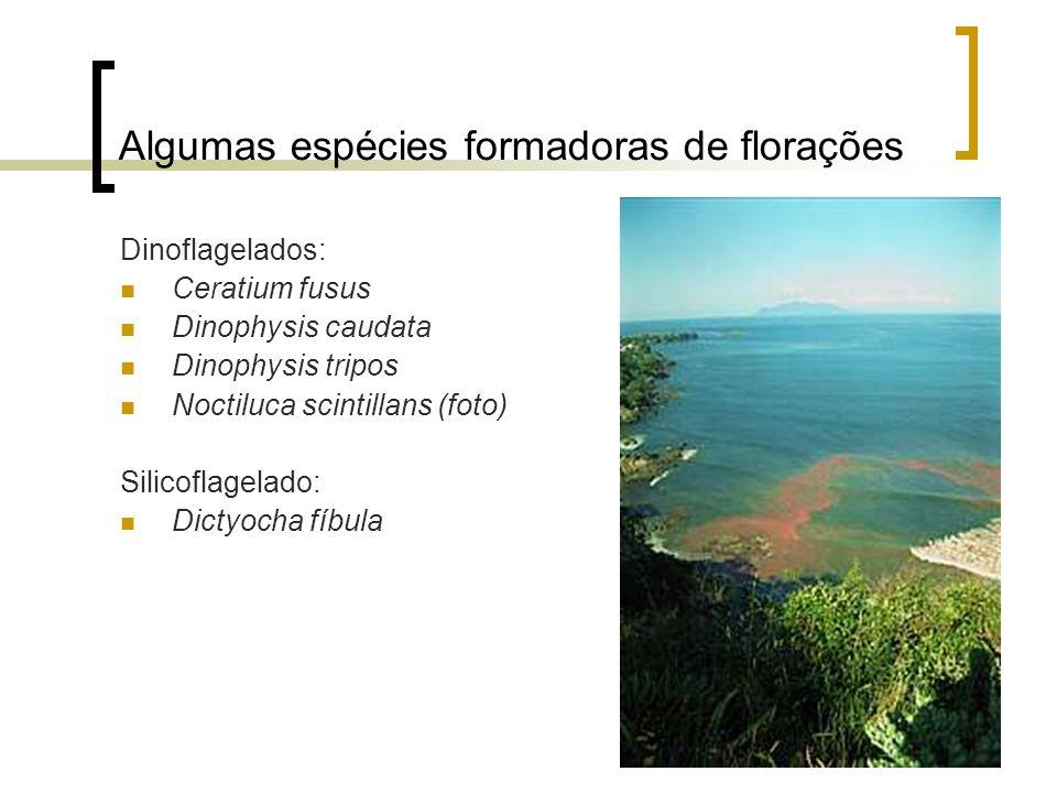 Tipos de florações Florações quem em geral não são tóxicas a humanos, mas são nocivas a outros organismos marinhos por intoxicação, dano ou oclusão do sistema respiratório das brânquias ou outros meios.