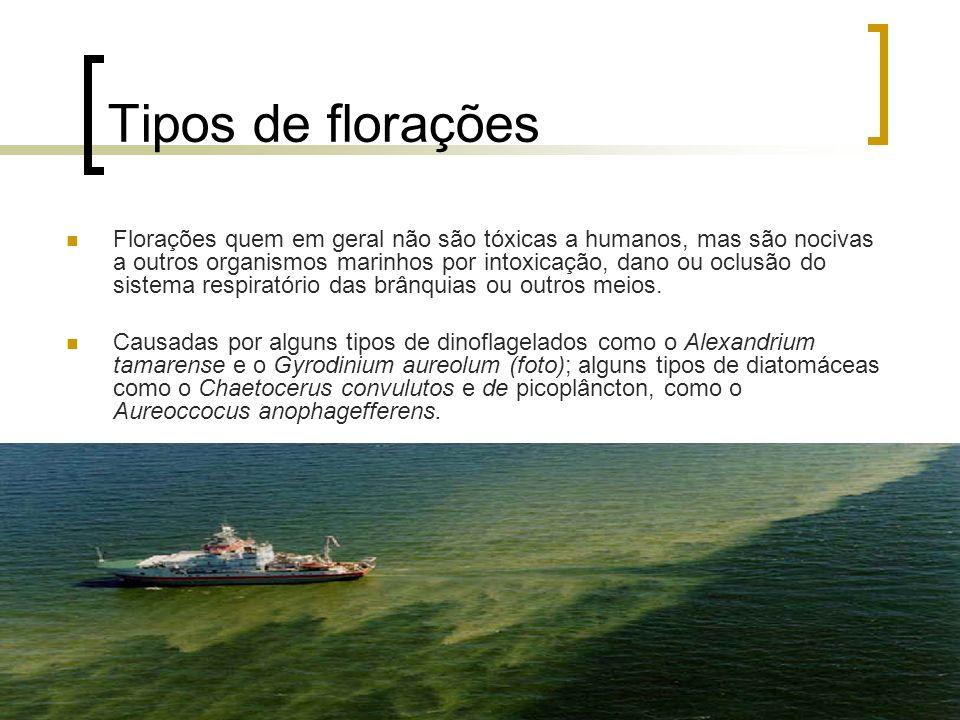Tipos de florações Florações quem em geral não são tóxicas a humanos, mas são nocivas a outros organismos marinhos por intoxicação, dano ou oclusão do