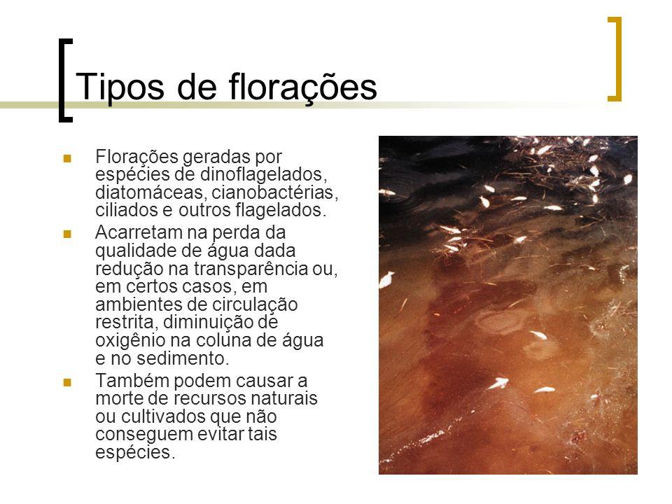 Tipos de florações Florações geradas por espécies de dinoflagelados, diatomáceas, cianobactérias, ciliados e outros flagelados. Acarretam na perda da