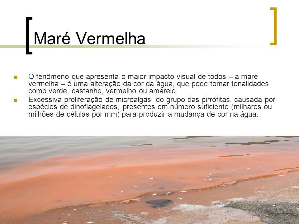 Maré Vermelha O fenômeno que apresenta o maior impacto visual de todos – a maré vermelha – é uma alteração da cor da água, que pode tomar tonalidades