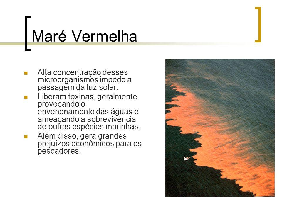 Maré Vermelha Alta concentração desses microorganismos impede a passagem da luz solar. Liberam toxinas, geralmente provocando o envenenamento das água