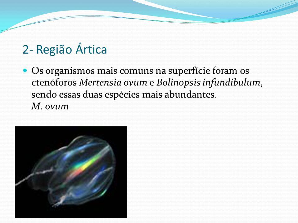 2- Região Ártica Os organismos mais comuns na superfície foram os ctenóforos Mertensia ovum e Bolinopsis infundibulum, sendo essas duas espécies mais