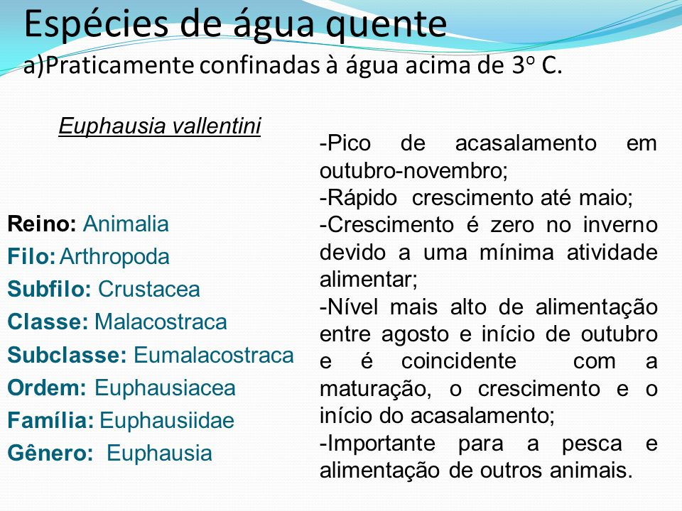 Espécies de água quente a)Praticamente confinadas à água acima de 3 o C. Euphausia vallentini Reino: Animalia Filo: Arthropoda Subfilo: Crustacea Clas