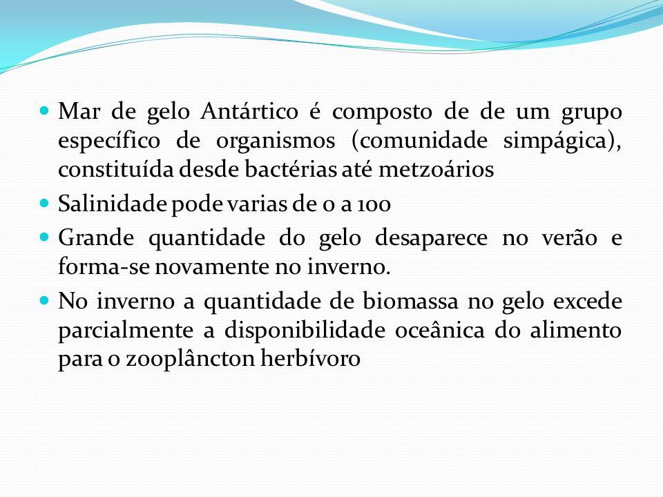 Mar de gelo Antártico é composto de de um grupo específico de organismos (comunidade simpágica), constituída desde bactérias até metzoários Salinidade