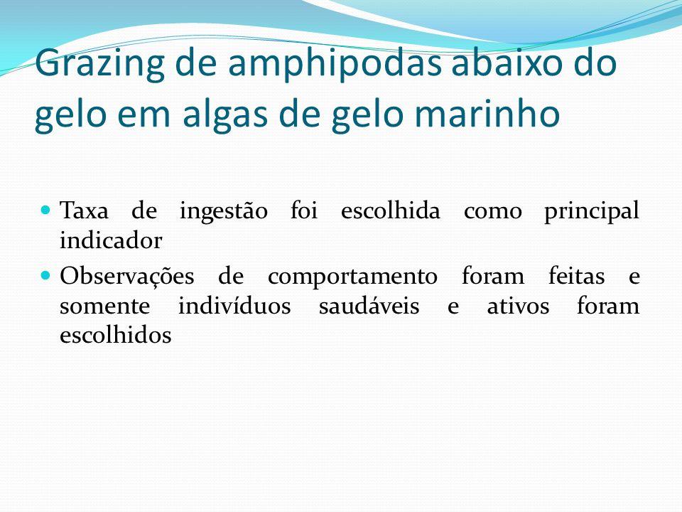 Grazing de amphipodas abaixo do gelo em algas de gelo marinho Taxa de ingestão foi escolhida como principal indicador Observações de comportamento for