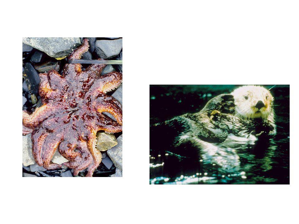 Água do mar Sedimentos Organismos
