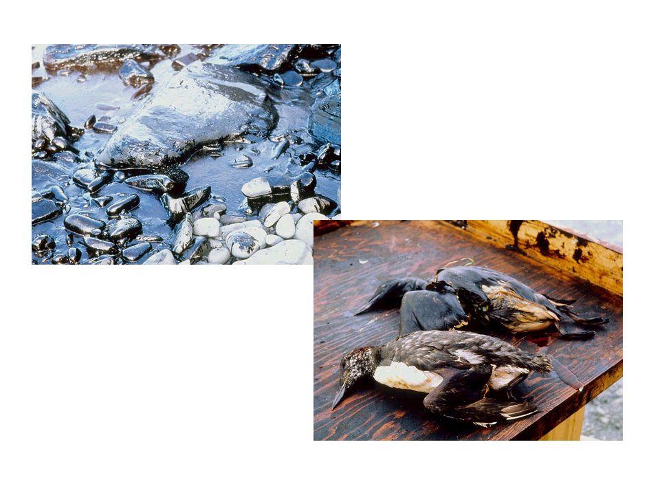 O óleo é aspirado com utilização de caminhões-vácuo ou bombas-vácuo e é transferido para recipientes como tambores.