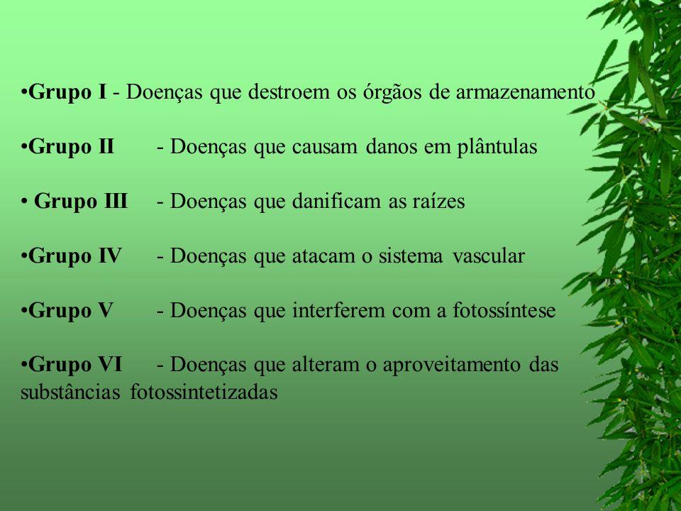 Grupo I - Doenças que destroem os órgãos de armazenamento Grupo II - Doenças que causam danos em plântulas Grupo III - Doenças que danificam as raízes