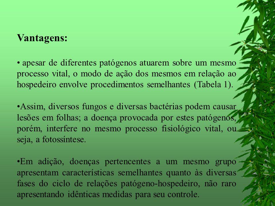 Mancha-bacteriana Xanthomonas campestris pv. vesicatoria