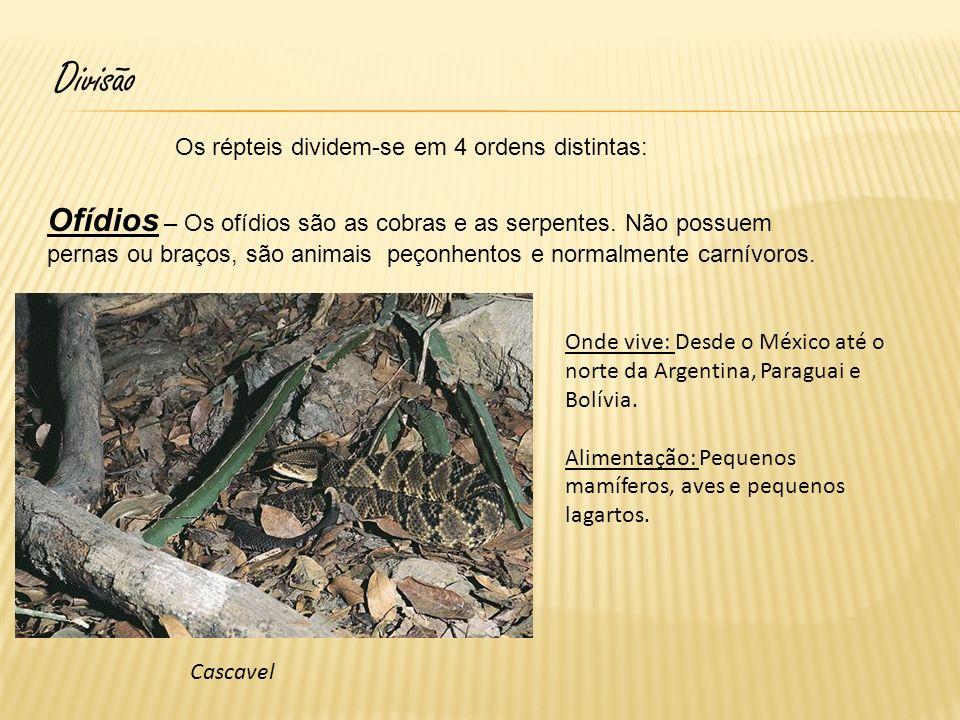 Cobra bicuda Onde vive: Desde o México passando pela América Central, até a metade norte da América do Sul, no limite sul do Peru, Brasil e Bolívia.