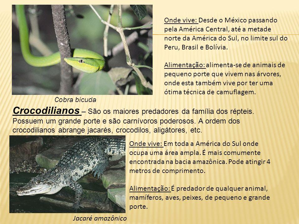 Onde vive: É um dos maiores crocodilos podendo chegar a 5m.