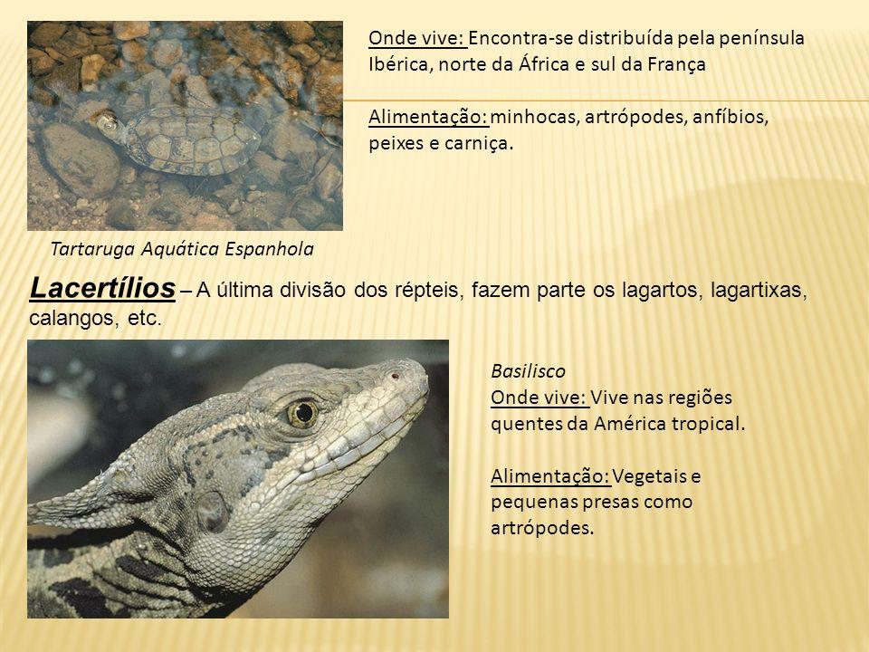 Tartaruga Aquática Espanhola Onde vive: Encontra-se distribuída pela península Ibérica, norte da África e sul da França Alimentação: minhocas, artrópo