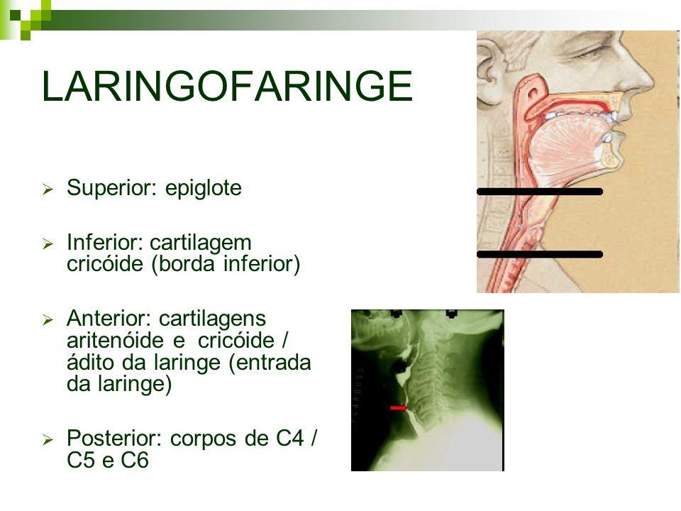 LARINGOFARINGE Superior: epiglote Inferior: cartilagem cricóide (borda inferior) Anterior: cartilagens aritenóide e cricóide / ádito da laringe (entra