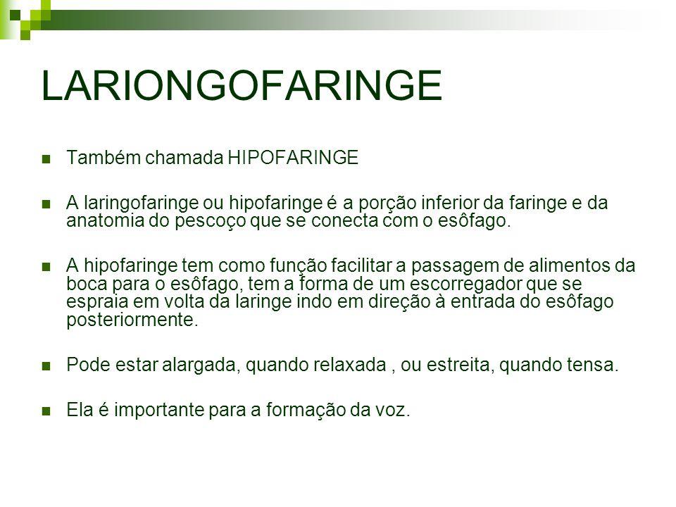 LARIONGOFARINGE Também chamada HIPOFARINGE A laringofaringe ou hipofaringe é a porção inferior da faringe e da anatomia do pescoço que se conecta com