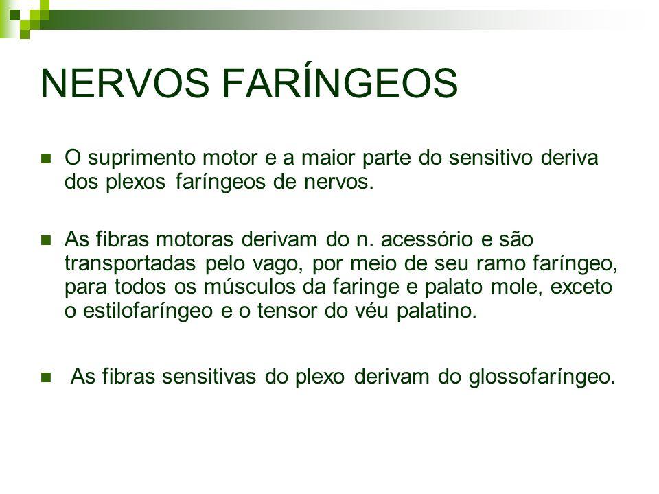 NERVOS FARÍNGEOS O suprimento motor e a maior parte do sensitivo deriva dos plexos faríngeos de nervos. As fibras motoras derivam do n. acessório e sã