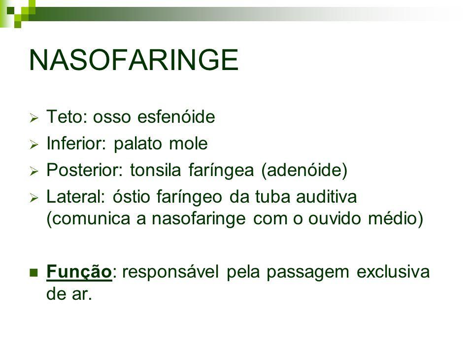 NASOFARINGE Teto: osso esfenóide Inferior: palato mole Posterior: tonsila faríngea (adenóide) Lateral: óstio faríngeo da tuba auditiva (comunica a nas