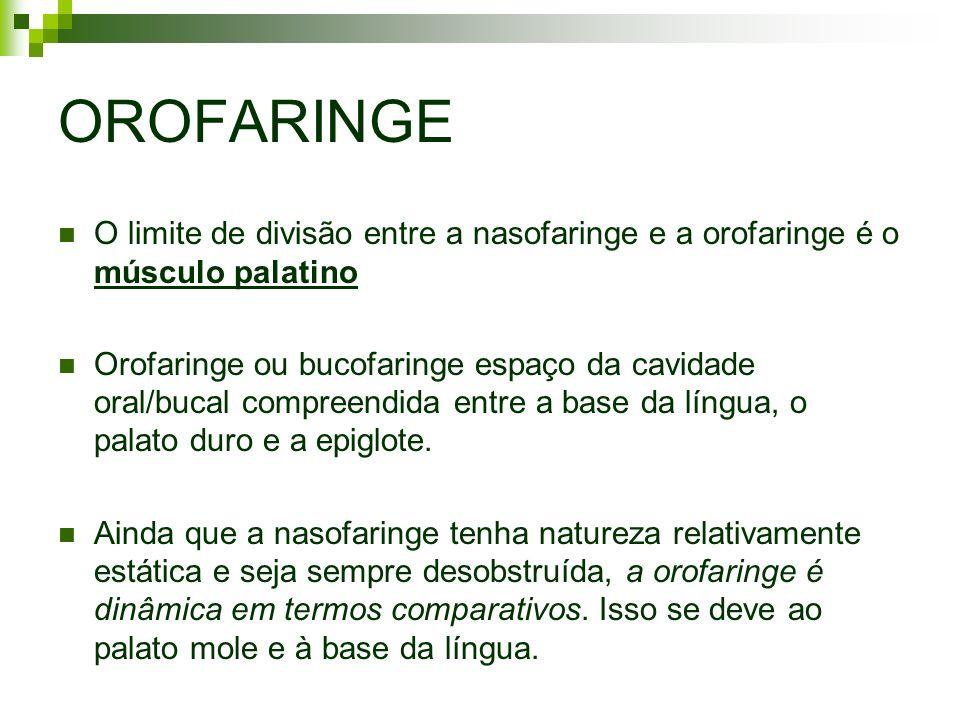 OROFARINGE O limite de divisão entre a nasofaringe e a orofaringe é o músculo palatino Orofaringe ou bucofaringe espaço da cavidade oral/bucal compree