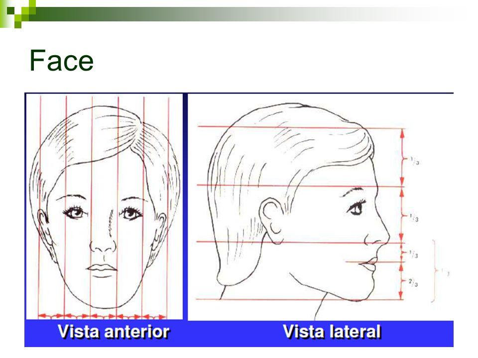 ATUAÇÃO FONOAUDIOLÓGICA SSMO A fonoaudiologia tem como objetivo o restabelecimento das funções de respiração, mastigação, deglutição e fala visando o equilíbrio destas funções e da musculatura da face.