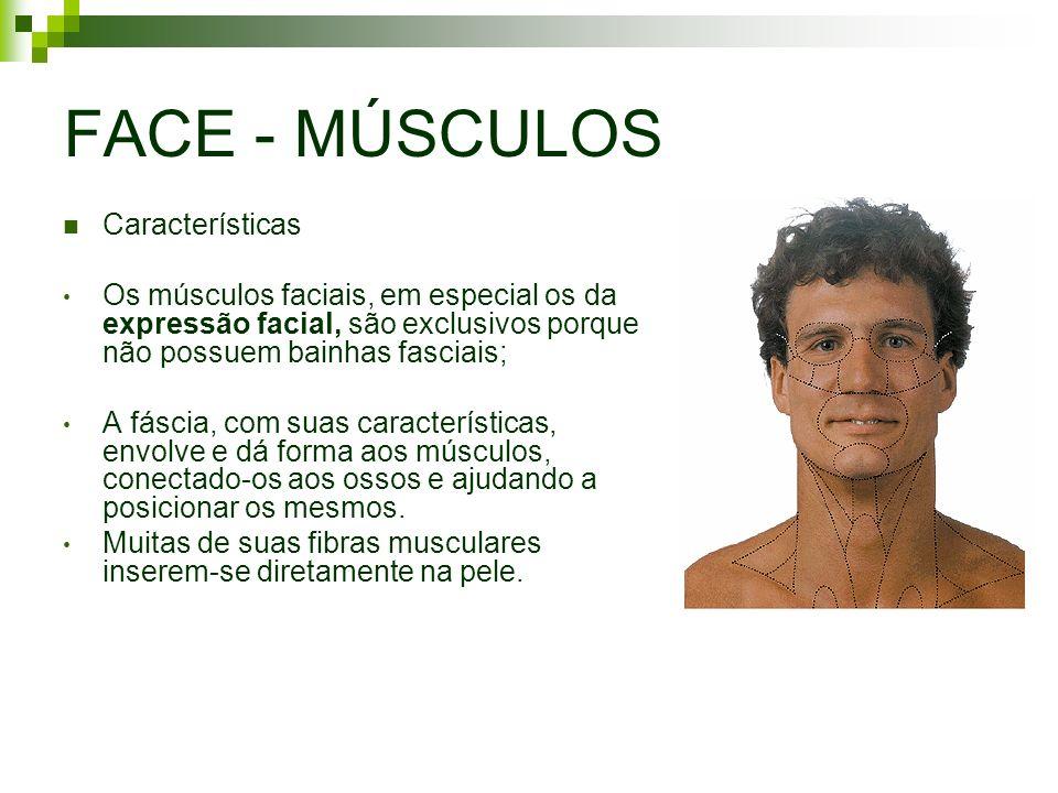 FACE - MÚSCULOS Características Os músculos faciais, em especial os da expressão facial, são exclusivos porque não possuem bainhas fasciais; A fáscia,