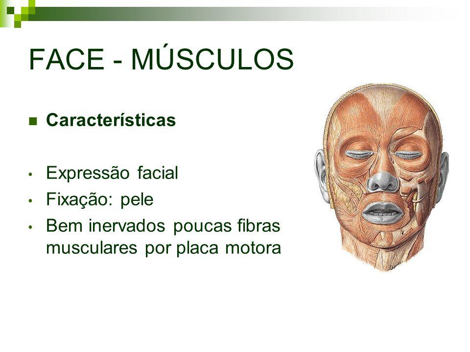 FACE - MÚSCULOS Características Expressão facial Fixação: pele Bem inervados poucas fibras musculares por placa motora
