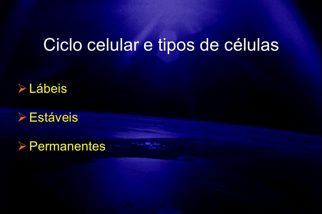Lábeis Estáveis Permanentes Ciclo celular e tipos de células
