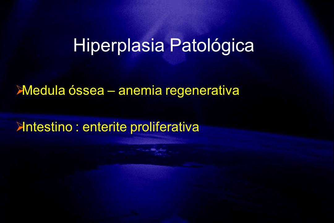 Medula óssea – anemia regenerativa Intestino : enterite proliferativa Hiperplasia Patológica
