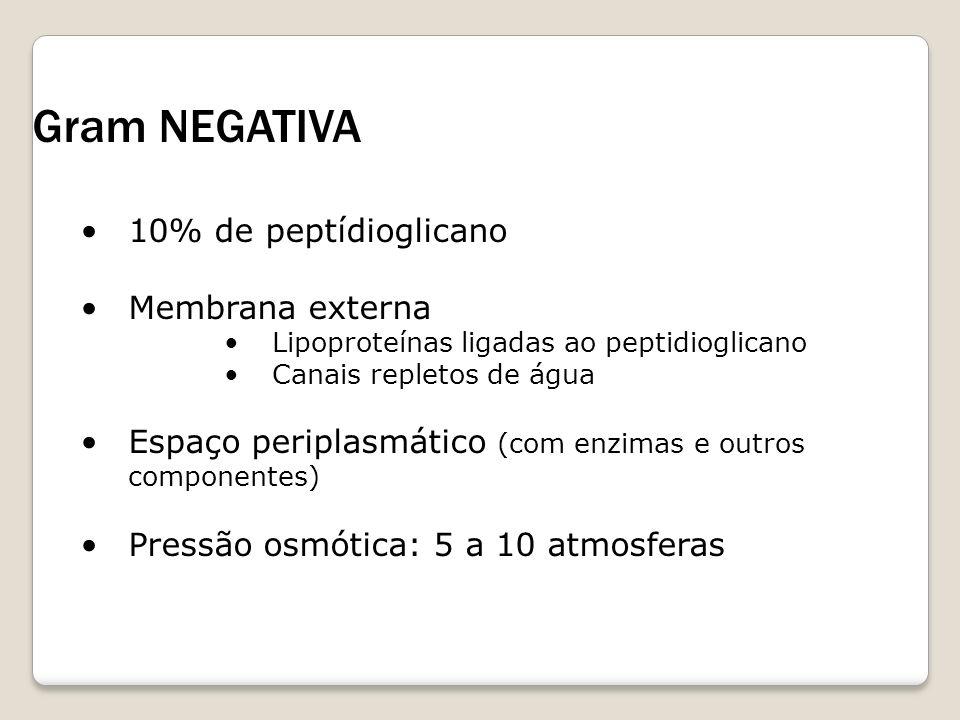 Gram NEGATIVA 10% de peptídioglicano Membrana externa Lipoproteínas ligadas ao peptidioglicano Canais repletos de água Espaço periplasmático (com enzi