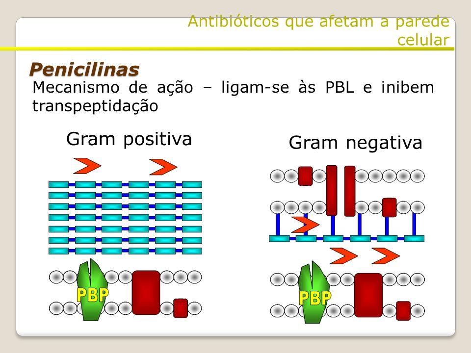 Gram positiva Gram negativa Penicilinas Antibióticos que afetam a parede celular Mecanismo de ação – ligam-se às PBL e inibem transpeptidação