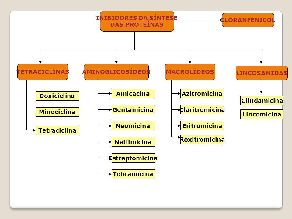 INIBIDORES DA SÍNTESE DAS PROTEÍNAS CLORANFENICOL TETRACICLINAS Doxiciclina AMINOGLICOSÍDEOSMACROLÍDEOS Minociclina Amicacina Tetraciclina Gentamicina