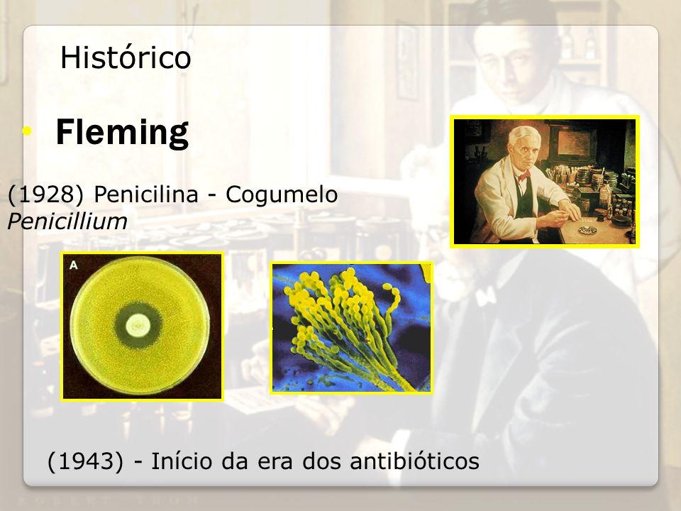 Fleming (1943) - Início da era dos antibióticos Histórico (1928) Penicilina - Cogumelo Penicillium