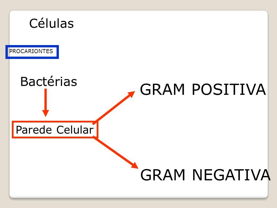 PROCARIONTES Bactérias Parede Celular GRAM POSITIVA GRAM NEGATIVA Células