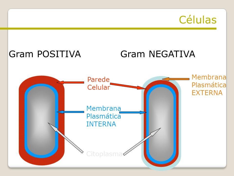 Gram POSITIVAGram NEGATIVA Parede Celular Membrana Plasmática INTERNA Membrana Plasmática EXTERNA Citoplasma Células